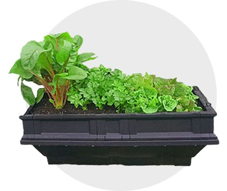 Vegepod raised garden bed kits are the perfect option to grow vegetables in an outdoor area. Self watering and chemical free container gardening made easy.