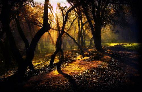 Dark Forest, Moldova    photo via itothe