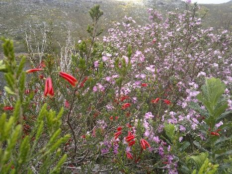 Silvermine Nature Reserve looking colourful, Cape Town, South Africa