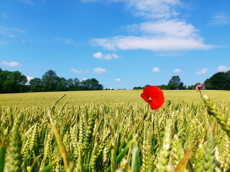 The Cotswolds, July 2012, by Virginie Alix