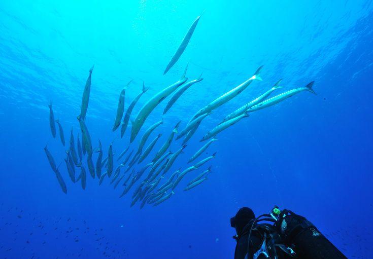 Diving Club ecosostenibile :Diving Center Ustica