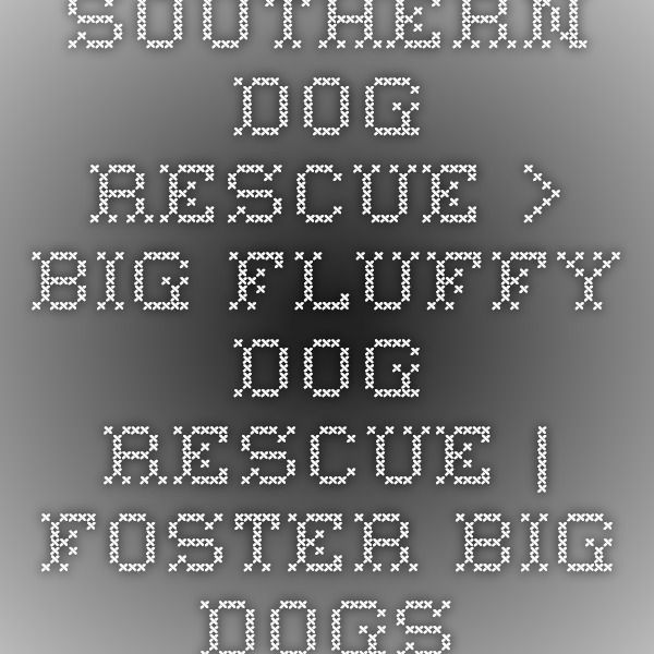 Southern Dog Rescue > Big Fluffy Dog Rescue | Foster Big Dogs.   NEEDS PEOPLE IN TENNESSE TO FOSTER AND ADOPT  http://www.bigfluffydogs.com/   FACEBOOK PAGE  https://www.facebook.com/bigfluffydogrescue
