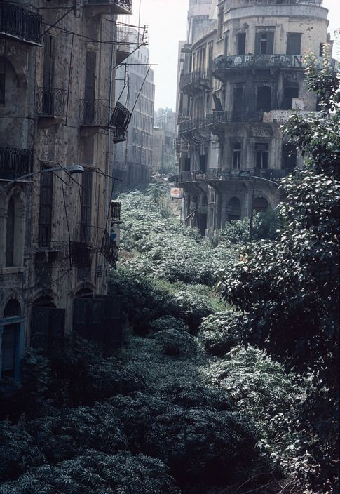 beautyofabandonedplaces:  The Green Line demarcation zone, Beirut, Lebanon 1982. [485×704] (x-post r/historyporn)