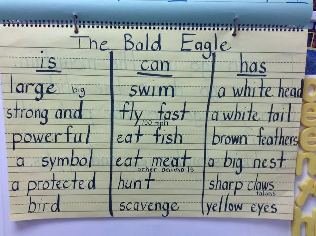 Kindergarten students writing books about the Bald Eagle
