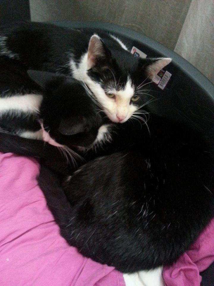 ACTU Animaux - Koda, un chaton guéri et adopté