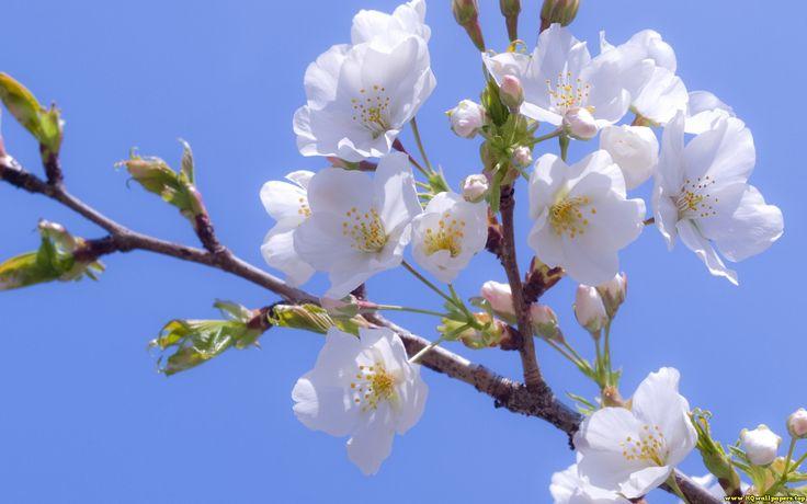 Blossom 40
