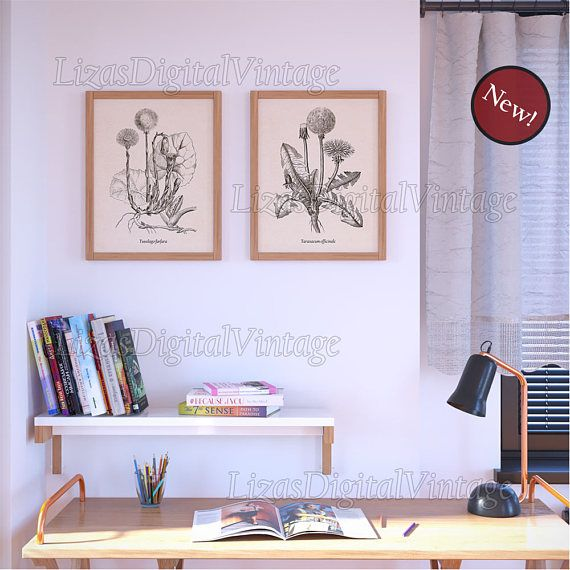 Kitchen Herbarium Art: 25+ Best Ideas About Herbs Illustration On Pinterest