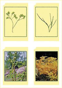 Haltia kasvit (kortit).