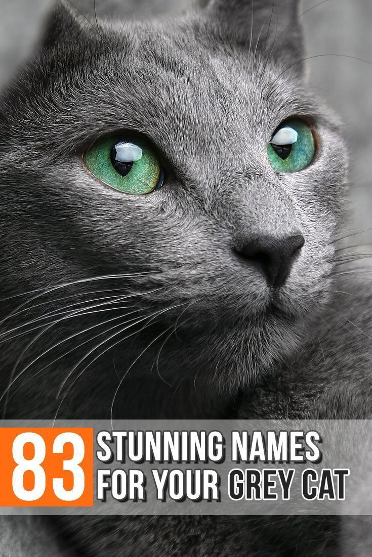 83 Stunning Names For Your Grey Cat