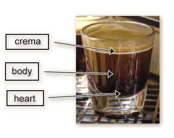 Espresso: Brown Topping, Coffee Espresso, Starbucks 101, Brown Color, Foamy Top, Coffee Shop