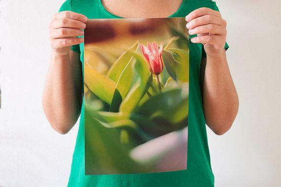 Il tulipano rosso FOTOGRAFIA fineart 20x30cm di BrightSpotOfColour, €22.00