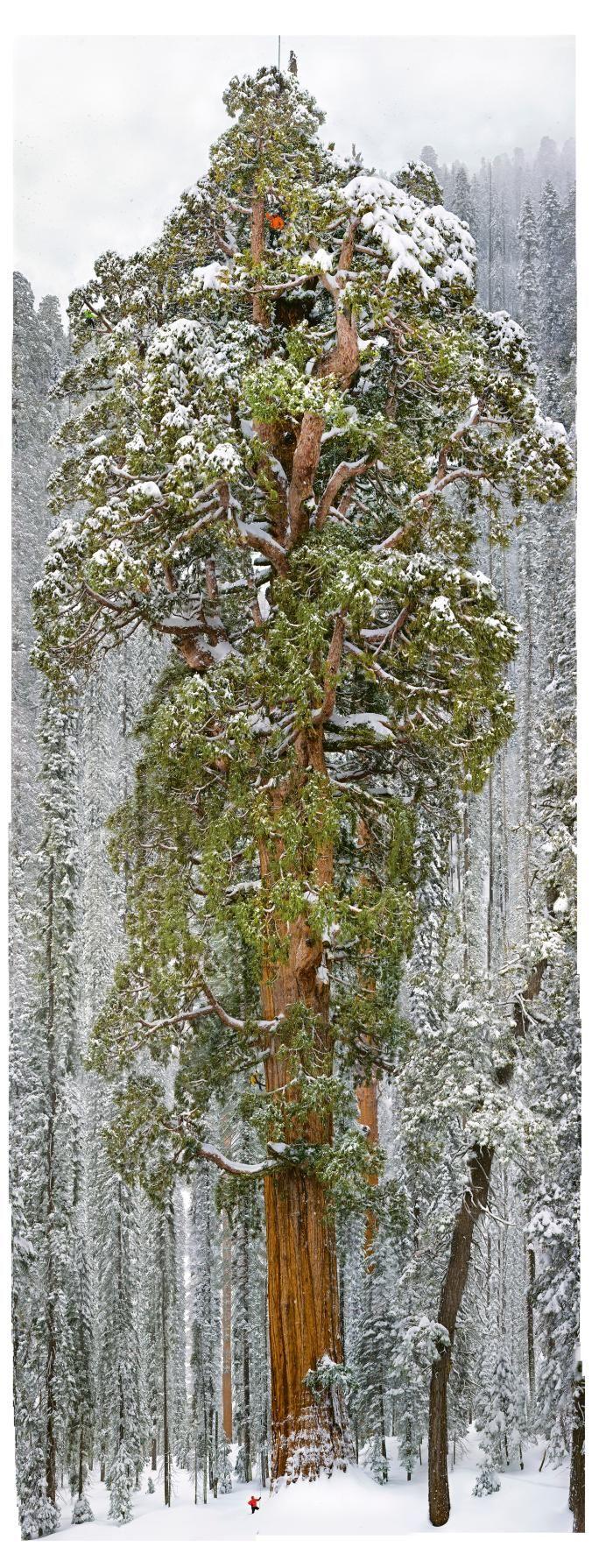 High angle view of mountains, Kaweah River, San Joaquin Valley, Sequoia National Park, Sierra Nevada, California, USA
