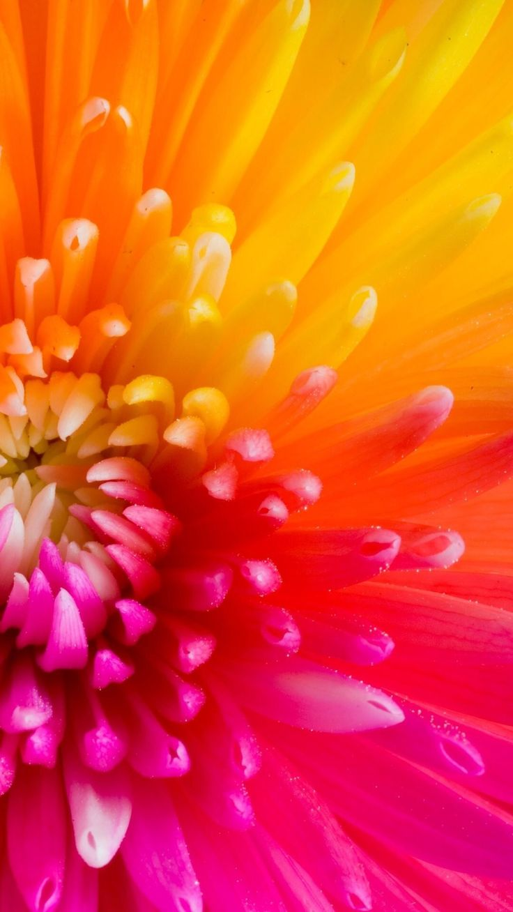 Beautiful colourful flower petals collection of 47 macro - Flower boy wallpaper iphone x ...