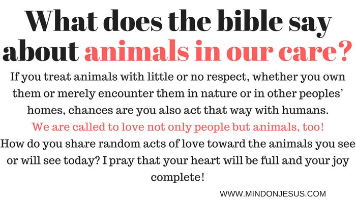 What does the bible say about loving animals in our care
