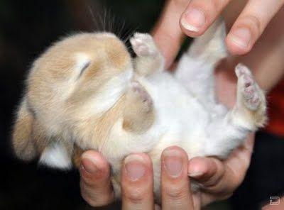 Cute Baby Bunny    CUTE!!!!!!!!!!!
