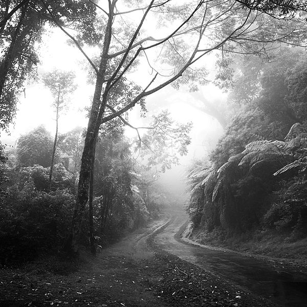 Hengki Koentjoro's Breathtaking Misty World.: White Photography, Nature, Hengki Koentjoro, Black White, Place, Landscape, Koentjoro Photography