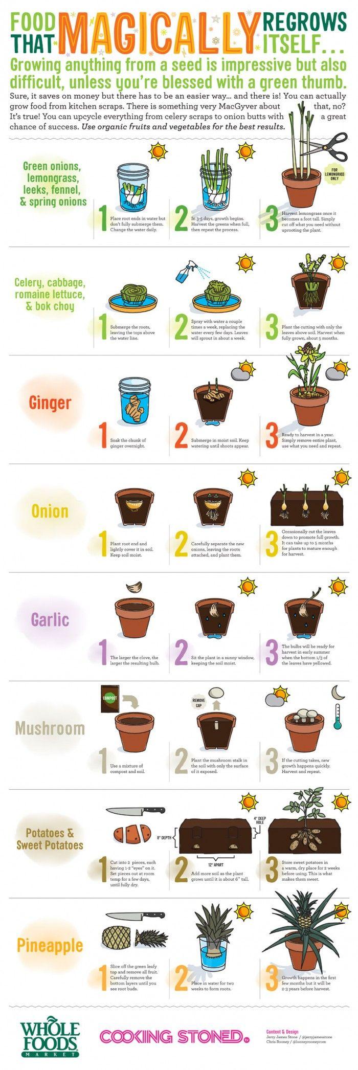 lista cosa possiamo piantare