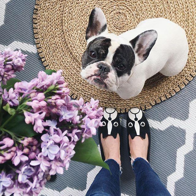 Best French Bulldog Images On Pinterest Dogs Best Friends - Ivette ivens baby bulldog