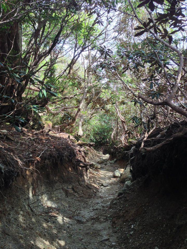 日本の世界遺産 屋久島 1993年12月 自然遺産登録 鹿児島県