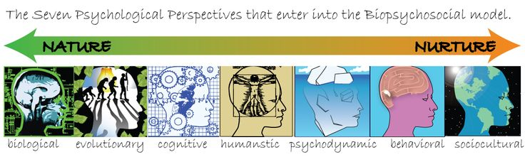 psychodynamic versus behavioral Psychodynamic versus behavioral these perspectives are behavioral, psychodynamic, humanistic, cognitive, sociocultural, and biological each perspective has its own unique way of explaining the human behavior.