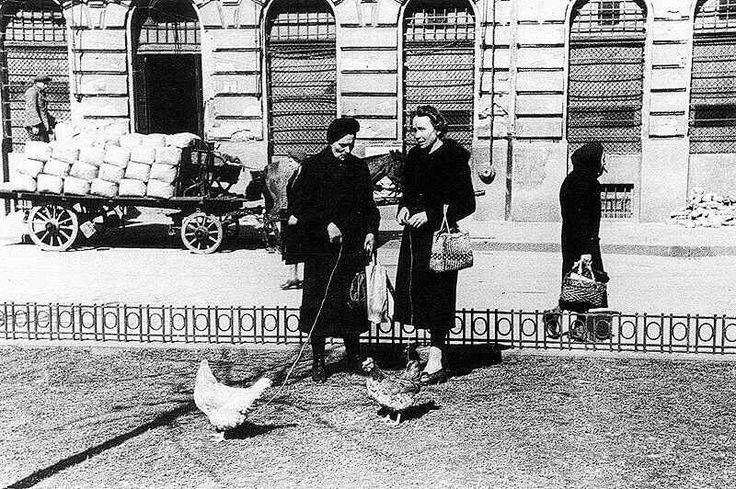 Csirkét legeltető pesti háziasszonyok 1946 tavaszán. Fotó: Békés András.