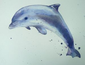 Dolphin Watercolor Demo – 12 step painting – eastwitching – everything watercolour, art and animals!