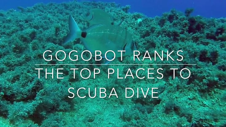 Dive Right In: 10 Top Scuba Destinations