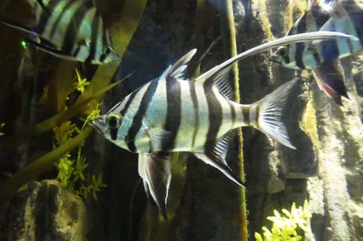 Striped Fish At Melbourne Sea Life Aquarium Australia - Beautiful photography reveals underwater complexity aquariums