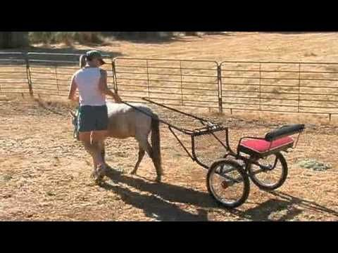 Teaching my miniature horse to drive, step by step