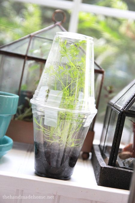 A simple windowsill greenhouse -- make several and plant a different seed in each!