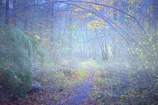 Fog in the forest at the end of October at Skaha Bluffs Provincial Park in Penticton, BC Canada
