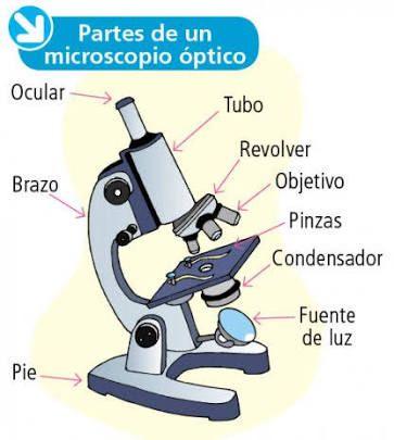 Resultado de imagen para dibujo de microscopio y sus partes