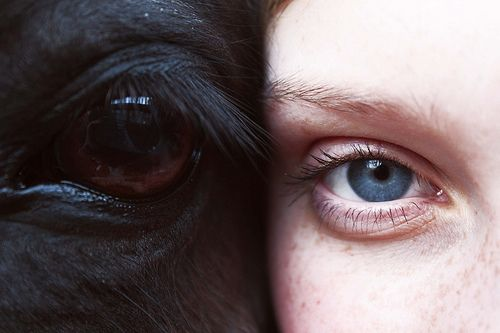 so doing this kind of a shot with my horse!!!Photos, Pictures Ideas, Senior Pictures, Hors Girls, Opposites Attraction, Senior Pics, Photography, Eye, Animal