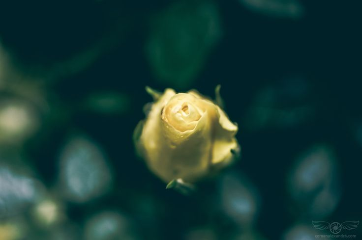 """Yellow - """"It was June, and the world smelled of roses. The sunshine was like powdered gold over the grassy hillside.""""  ― Maud Hart Lovelace, Betsy-Tacy and Tib"""