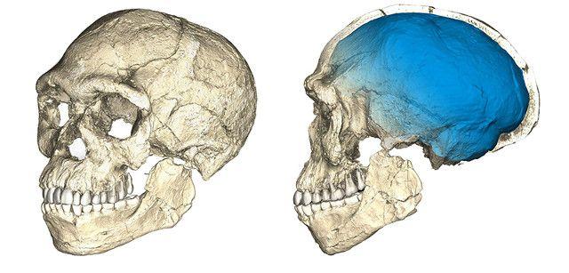 """Due articoli pubblicati sulla rivista """"Nature"""" descrivono diversi aspetti di uno studio riguardante varie ossa fossili tra cui un cranio e una mandibola scoperti in un sito di Jebel Irhoud, in Marocco. Vari ricercatori guidati dal Max Planck Institute for Evolutionary Anthropology di Lipsia, in Germania, hanno studiato le ossa ma anche resti di animali trovati assieme ad esse per concludere che si tratta di Homo sapiens di circa 300.000 anni fa, oltre 100.000 anni più vecchio dei fossili di…"""