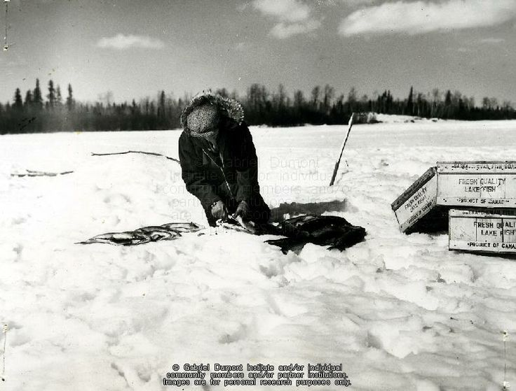 """Commercial fishing: """"Métis worker cleans fish in preparation for crating and transport to the fish filleting plant at La Ronge"""" n.d. THE VIRTUAL MUSEUM OF MÉTIS HISTORY AND CULTURE."""