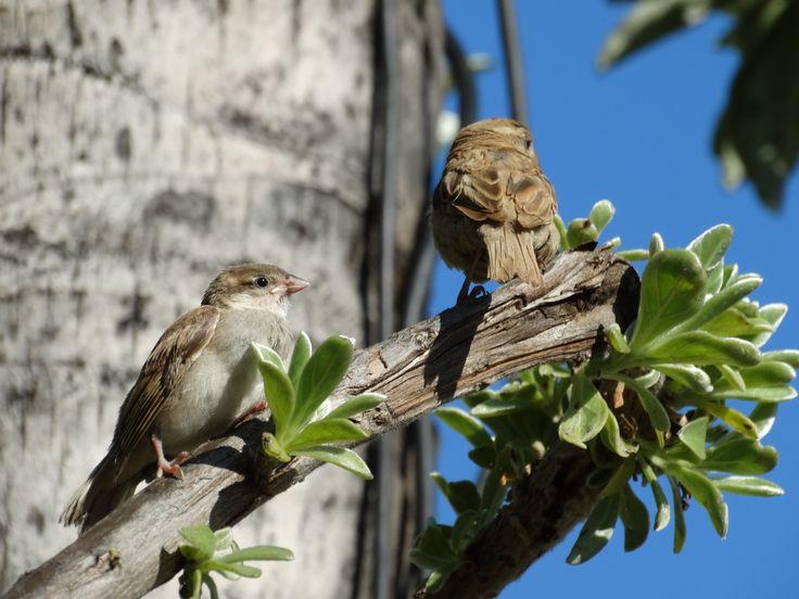birds in Mauritius