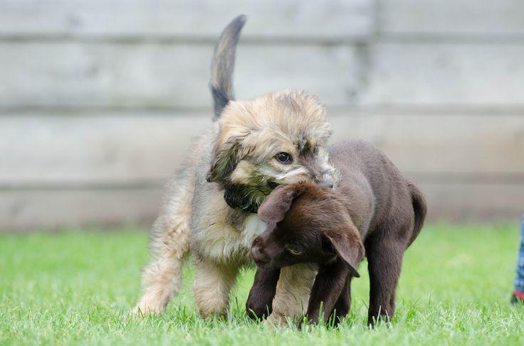How To Beissverhalten Beim Welpen Abstellen Welpen Hund Und