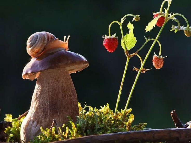 демонстрирующий современный картинки живых грибов изначально