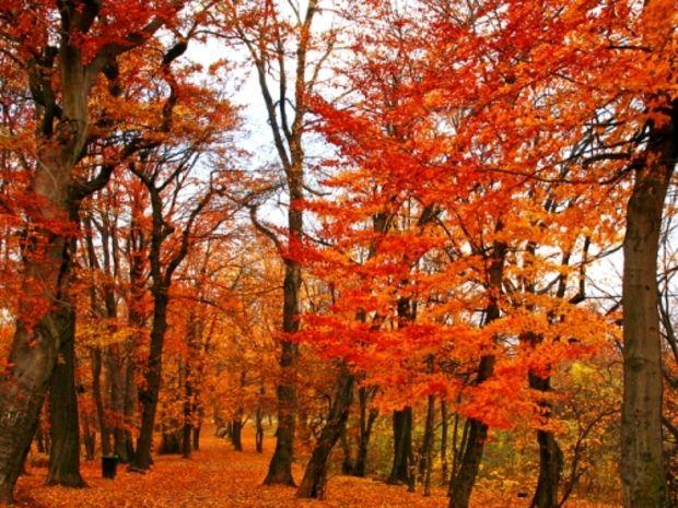 slovensko na jeseň - Hľadať Googlom