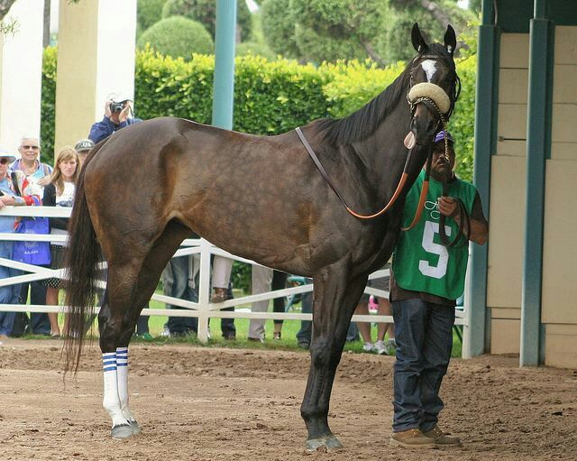 303 Best Horse Racing Pictures Images On Pinterest Horse