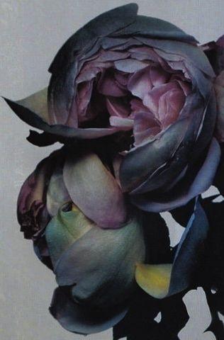 Flowers. Peonies. Grey. Depp Purple. #colourinspitation #textures www.naturalhistory.co.uk