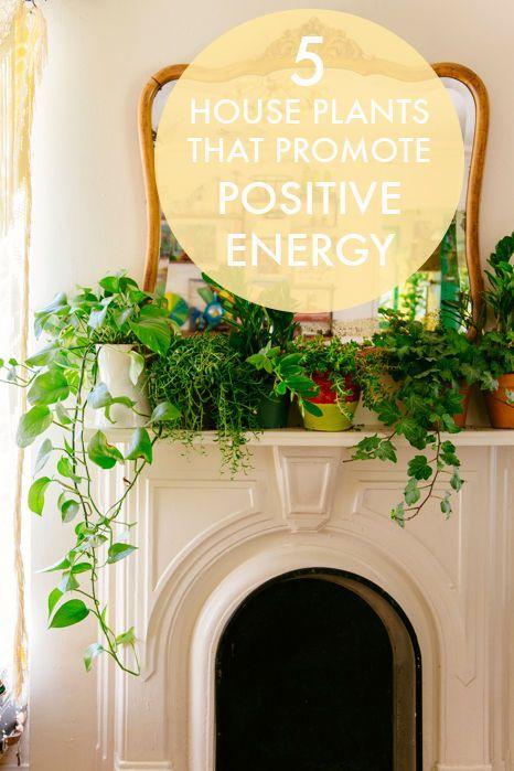 5 House Plants That Promote Positive Energy