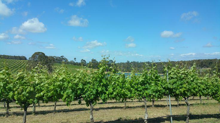 More vineyards WA