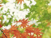 PRYDNADSTRÄD, BUSKAR & BARR - Med god kännedom om prydnadsträd, buskar och barrväxter kan du göra livskraftiga och funktionella planteringsförslag samt identifiera och namnge vilka växter som redan finns i en uppväxt trädgård. http://trga.se/utbildning/prydnadstrad-buskar-barr/