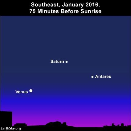 Get up at least 75 minutes before sunrise, and you can use Venus to find the great line-up of planets stringing across in the January 2016 morning sky.