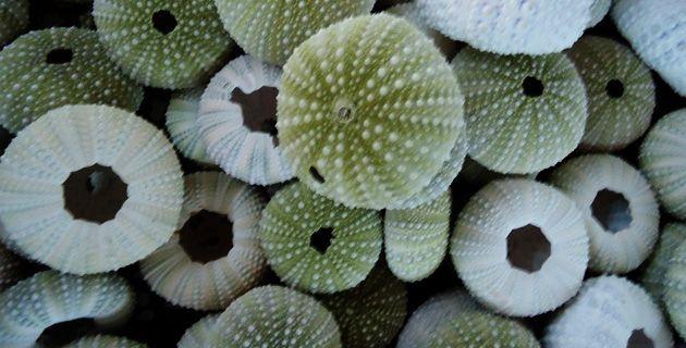 Museo de Conchas y Caracoles Marinos de Mazatlán | México Desconocido