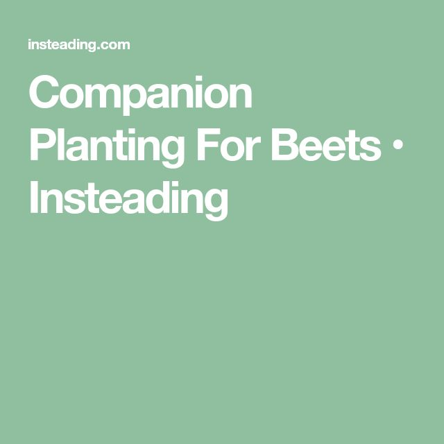 Companion Planting For Beets Companion Planting Beets 640 x 480