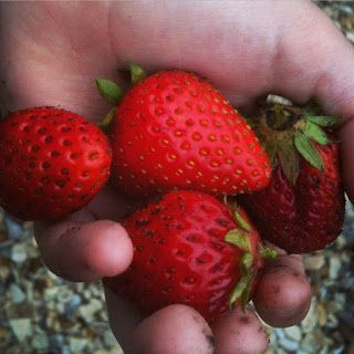 Pests in your strawberry patch come in all sizes