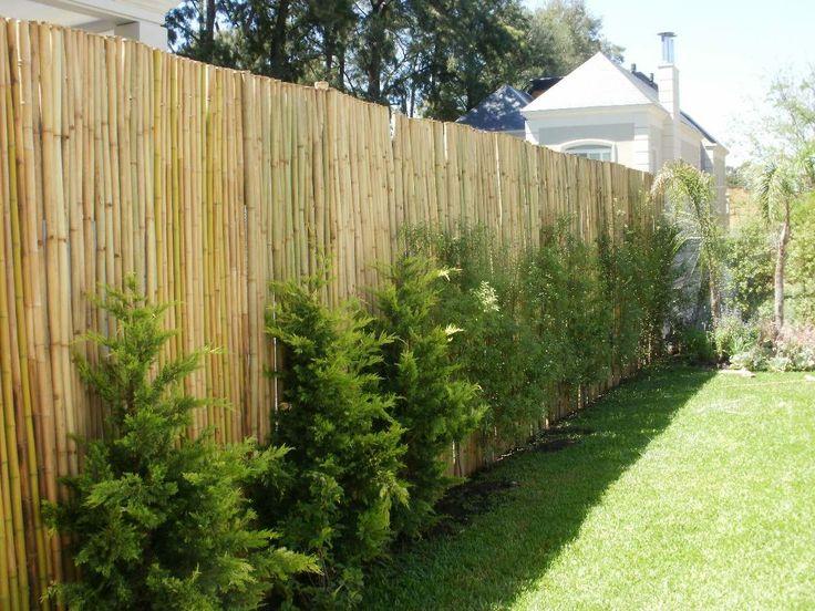 Decoracion de interiores con plantas ca as de bambu - Plantas para vallas ...